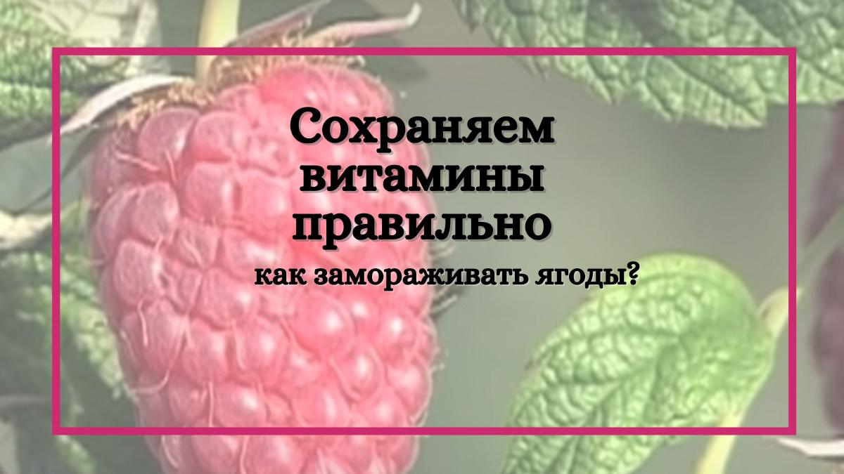 Запасайся правильно: как необходимо замораживать ягоды, чтобы сохранить витамины?